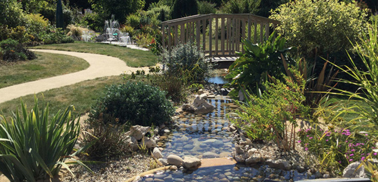 Bassin de jardin aquatique